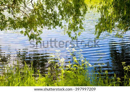 nature ,amazing bent trees, bent branches , branches bent near water ,water , park ,forest ,river ,river in forest ,reflection in water ,wonderful color water , river in forest ,denmark danish nature  - stock photo