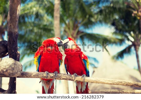 nature and animals concept - couple of red parrots sitting on perch - stock photo