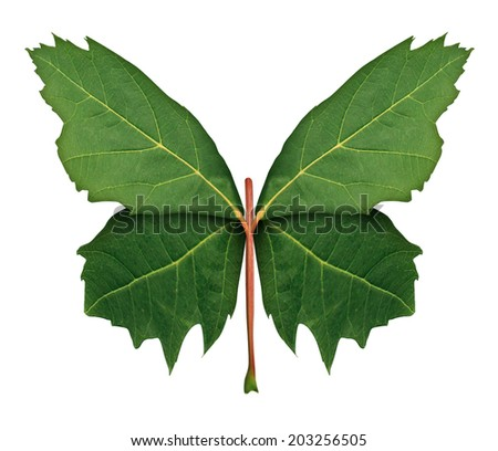 Nature and hope as a symbol of growth and development with a front view green leaf shaped as wings of a butterfly as a metaphor for learning discovery and imagination isolated on a white background. - stock photo