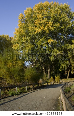 Nature and its way - stock photo