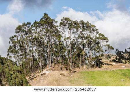 Nature and ruins of Ingapirca, Inca city,  Canar Province, EcuadoEcuador - stock photo