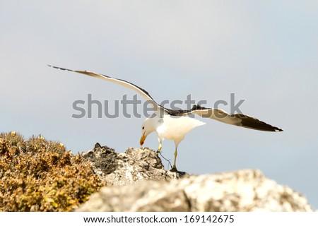 Nature and wildlife sanctuary in Isla Damas, Punta de Choros, La Serena, Chile - stock photo