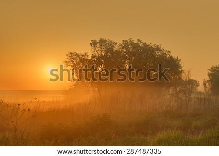 Nature at dawn - stock photo