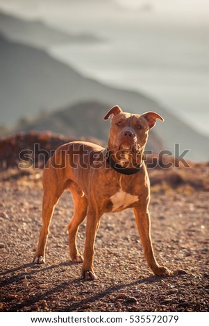 Nature Autumn Animals Leaves Dogs Iron Pitbull Natural Park Background