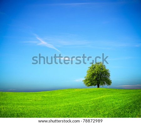 Nature background - stock photo