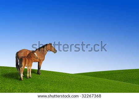 nature background and horses