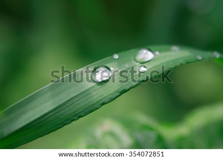 Nature background. Closeup of long grass with water drop - stock photo
