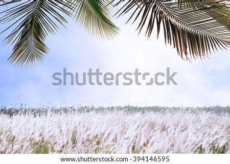Nature background coconut leaves beautiful view selective focus,copy space - stock photo