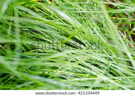 Nature background. Dew on the lush green grass - stock photo