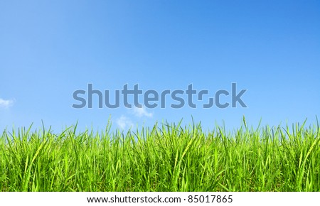Nature background, grass and sky - stock photo