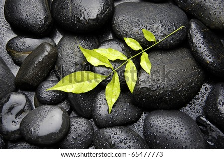 Nature background-green leaf on wet pebble