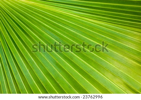 nature background green palm leaf