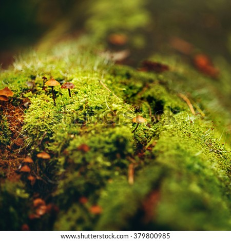 Nature Background. Moss Close Up View with Little Mushrooms (Toadstool) Grown. Macro Details. Selective Focus. - stock photo