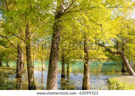 Nature background of autumn forest with colorful tree and leaves. - stock photo