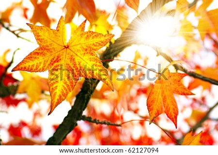 Nature background of bright and colorful Fall leaves - stock photo