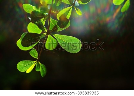 Nature background of spring foliage in the morning with sun ray spectrum in dark background