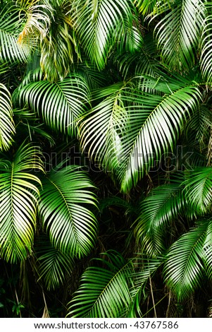 Nature background of tree leaf in tropical area. - stock photo