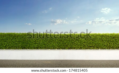 Nature background, panoramic view of beautiful green hedge fence with blue sky - stock photo