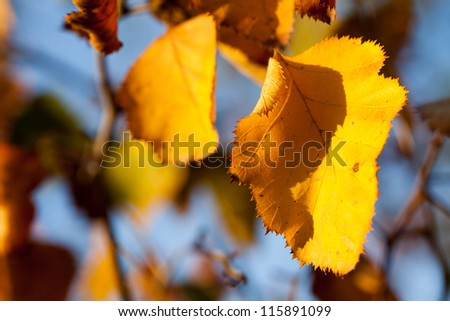 Nature background with autumn yellow leaves
