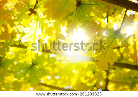 Nature background with backlit vivid yellow leaves - stock photo