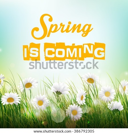Nature Background with Flowers in the grass - stock photo