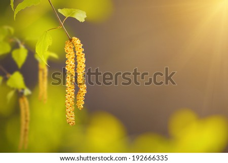 Nature background with green birch branch