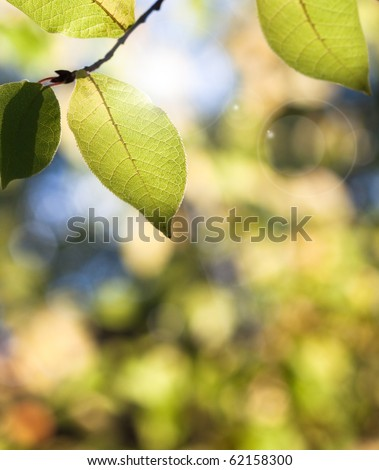 Nature background with leaves on tree (shallow depth of field) - stock photo