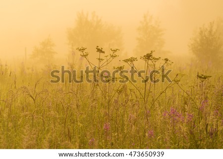 Nature beautiful background with field grass and yellow misty sunlight