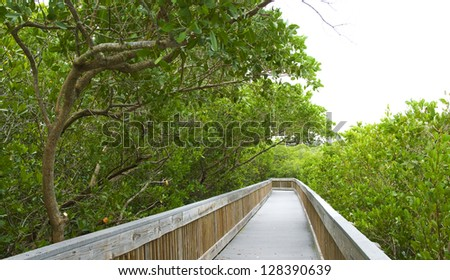 Nature boardwalk through a mangrove forest in Florida - stock photo