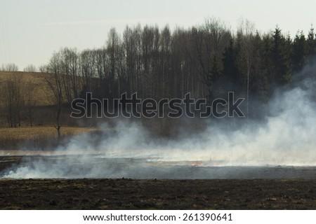 Nature burning - stock photo
