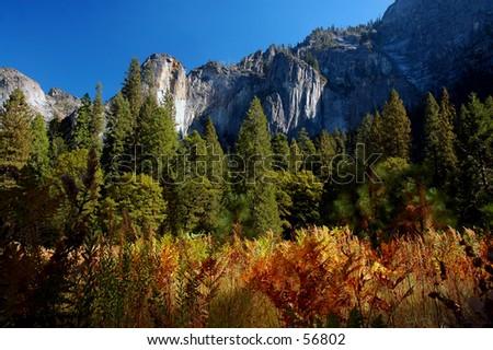 Nature Canvas - stock photo