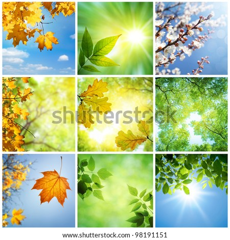 Nature Collage - stock photo