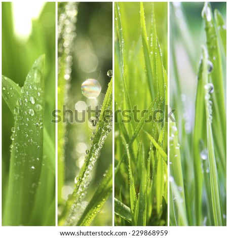 Nature collage. Macro grass with water drops - stock photo