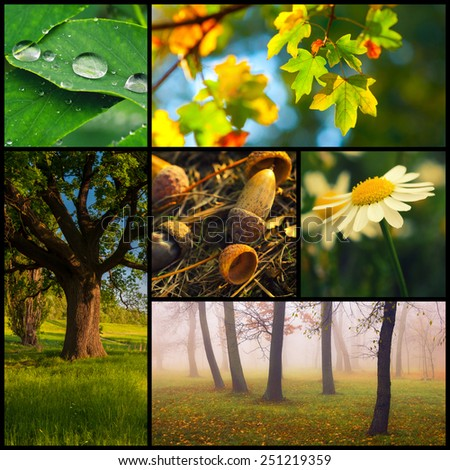 Nature collage representing diversity of life in all seasons. - stock photo