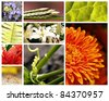Nature collage with brightly colored fauna and flora - stock photo