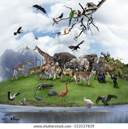 Nature Collage With  Wild Animals And Birds  - stock photo