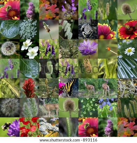 Nature Collection Photo Collage - SEE MORE IN MY GALLERY