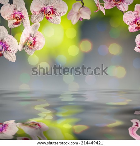 Nature composition. Orchid flowers on a blurred nature background, reflected in water - stock photo