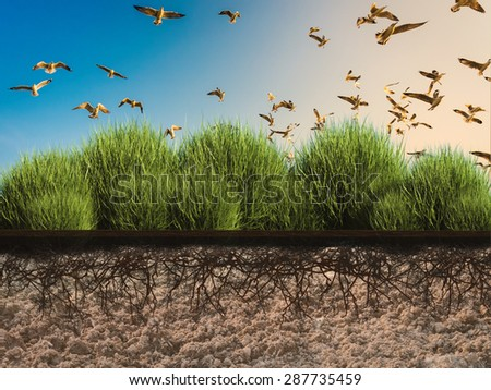nature conservation concept with side view plant growing  - stock photo