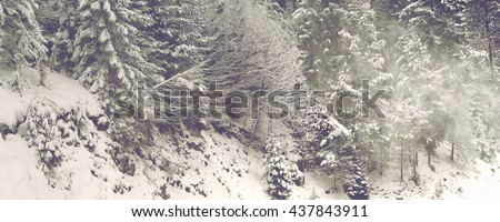 Nature Detail of Snow Covered Trees in Thick Forest on Alpine Mountainside - Scenic Winter Landscape of Frozen Trees - stock photo