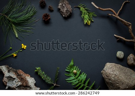 Nature details collection - background layout with free text space. Stones, tree bark, cones, marsh marigold flower, pine tree branches and fern leaf with snail on black captured from above. - stock photo