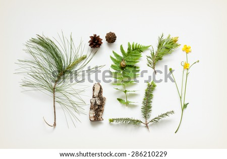 Nature details collection - poster concept. Tree bark, cones, marsh marigold flower, pine tree branches and fern leaf with snail on white cream background captured from above. - stock photo