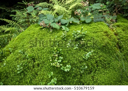 nature details in the forest, wet moss and vegetation