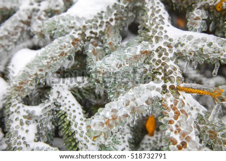 Nature encased in ice after a storm. Ice storm in Moscow, frozen water droplets on branches. Beautiful background, shallow depth of field with copy space. Icicles on leaves.