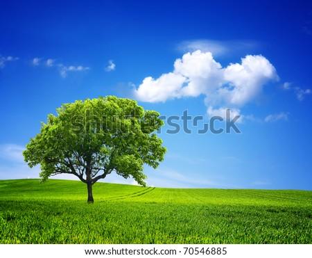 Nature Environment - stock photo