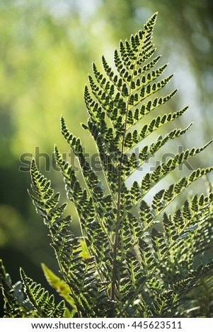 Nature environment scenery, fern leaf and forest trees blur background in vibrant green colors.  - stock photo