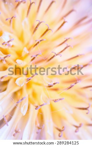 Nature flower close-up - stock photo