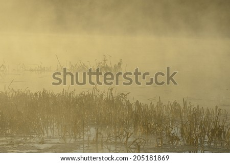 Nature foggy background with coastal reed and fog on lake water  - stock photo