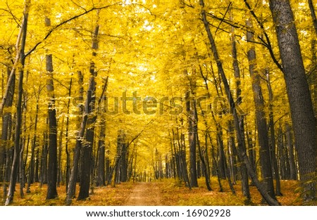 nature. forest with yellow leaves in autumn