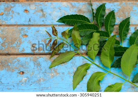 Nature fresh neem on old blue wooden - stock photo